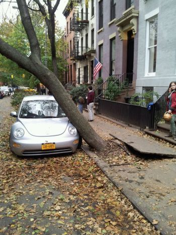 Brooklyn - This car is holding up the tree