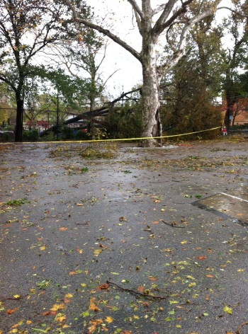Brooklyn - a local playground is locked up as trees are uprooted and unstable