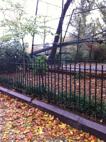 Brooklyn - the day after Sandy hits our neighborhood